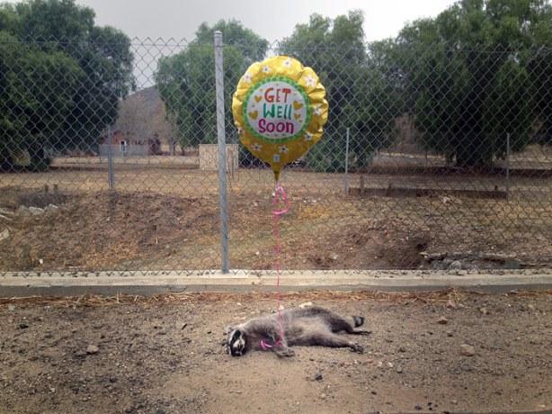 Raccoon-balloon